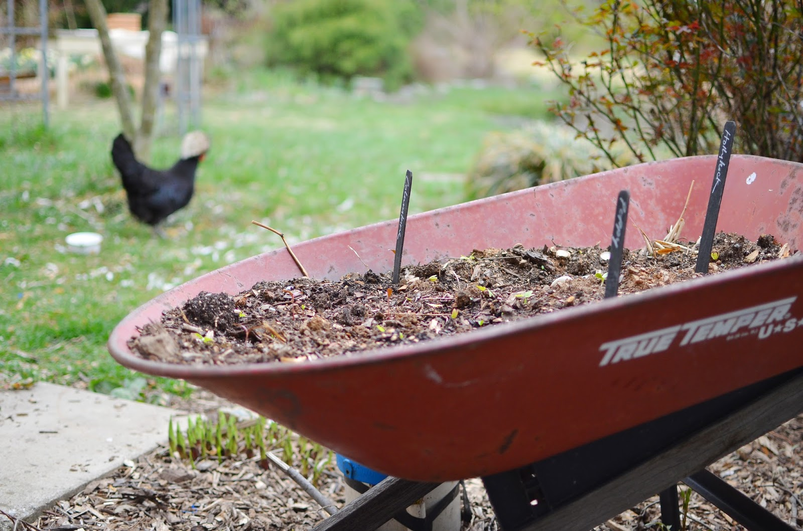 A Nest for All Seasons – When Do You Start Planting a Garden
