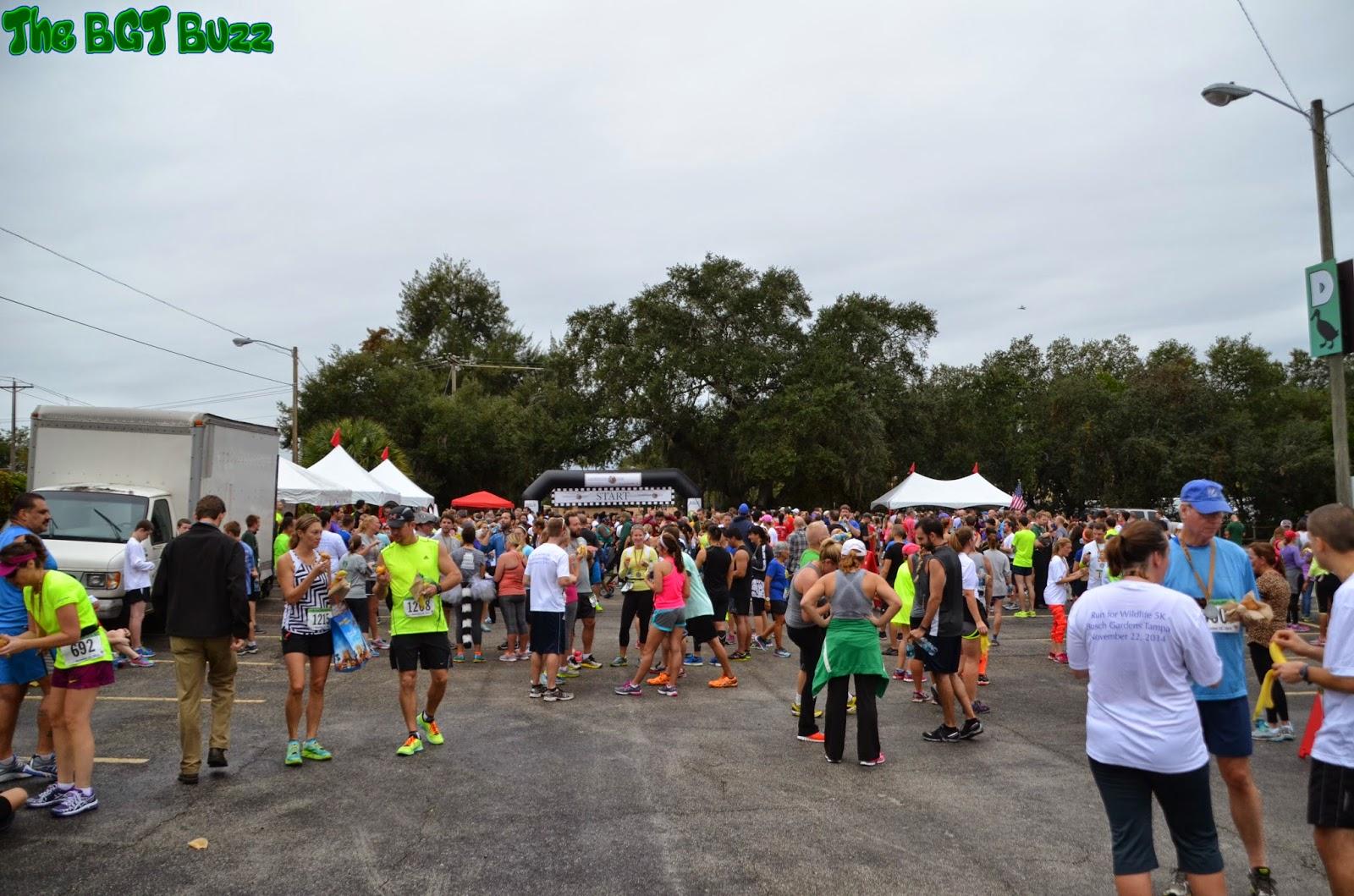 The Bgt Buzz Run For Wildife 5k 2014 At Busch Gardens Tampa