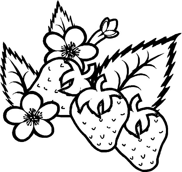 Strawberries Coloring Pages