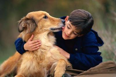 Menino no campo com cachorro