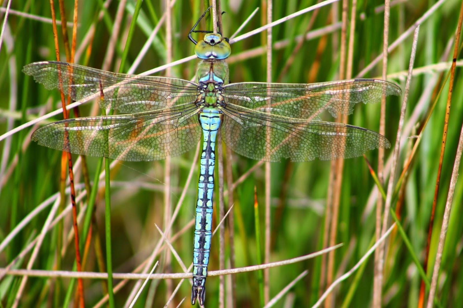 M Hogan Glamorgan 3 Valleys Birding: A C...