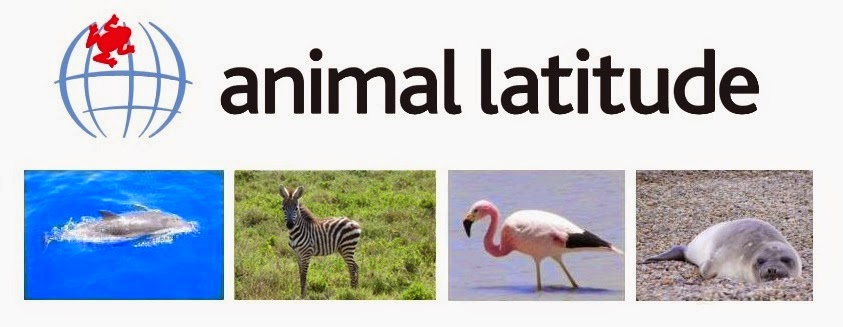 animal latitude