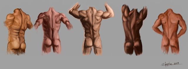 study anatomy of the back