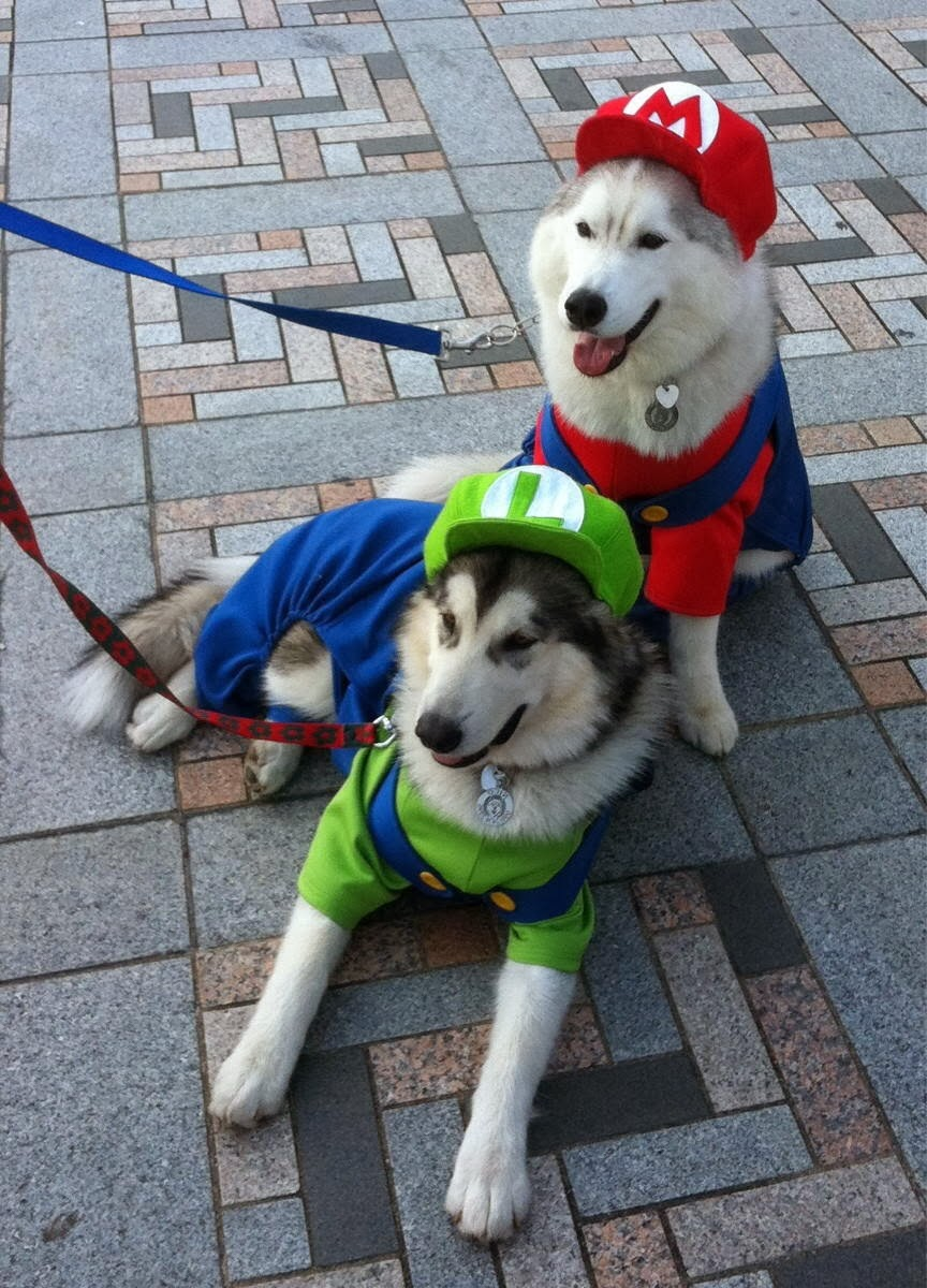Cute dogs - part 11 (50 pics), two cute dogs wear Mario Bros costume