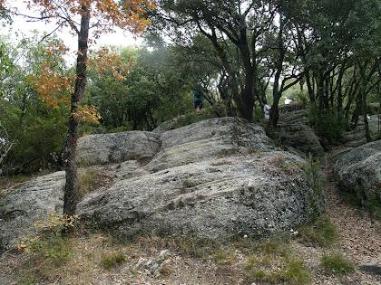 L'indret del Coll dels Bardissars a 915 m.a.