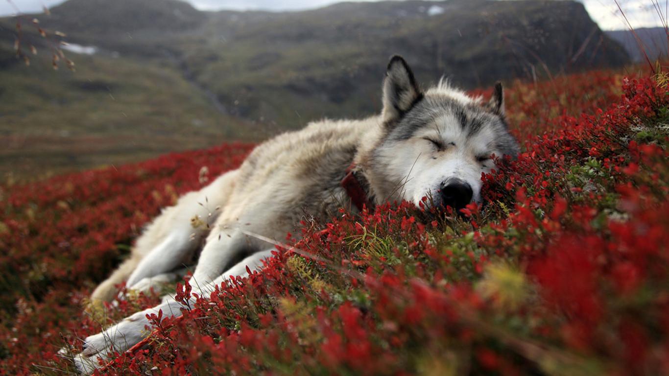 beautiful photos of animals, animal photos, beautiful animals, animal