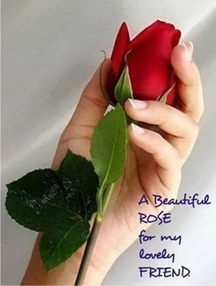 beautiful rose for my friends