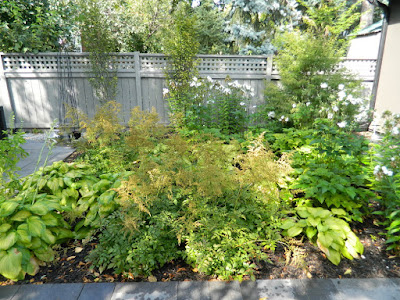 Paul Jung Gardening Services Danforth backyard by garden muses-not another Toronto gardening blog
