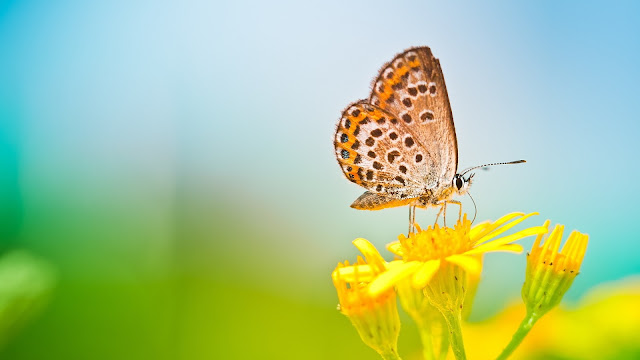 Spring butterfly yellow flower blurred background HD Wallpaper