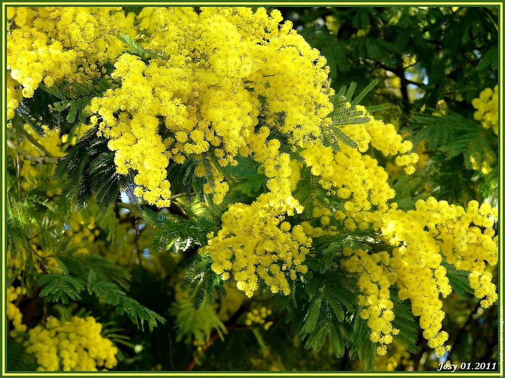 ... mimosa mimosa asparagus mimosa mimosa cupcakes strawberry mimosa