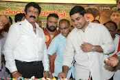 Balakrishna Birthday Celebrations-thumbnail-18