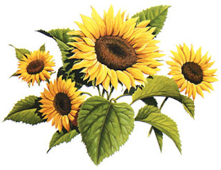 foto gambar seikat bunga matahari