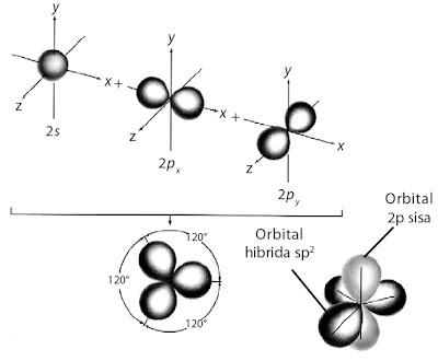 Pembentukan orbital hibrida sp2.