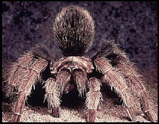 Contoh Hewan Arthropoda