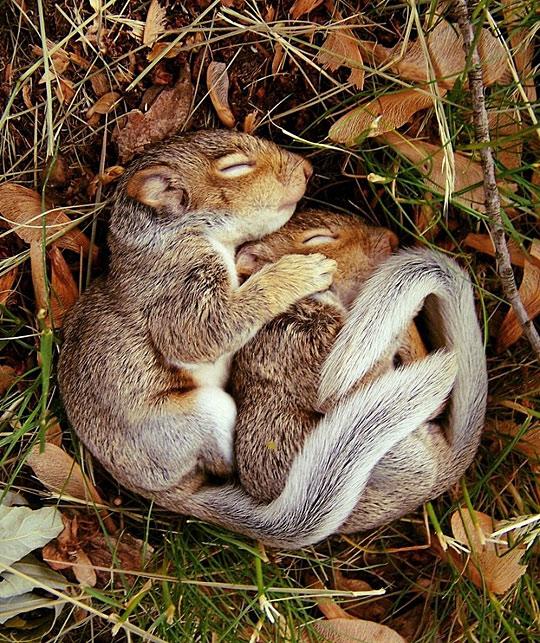 Squirrel Kids