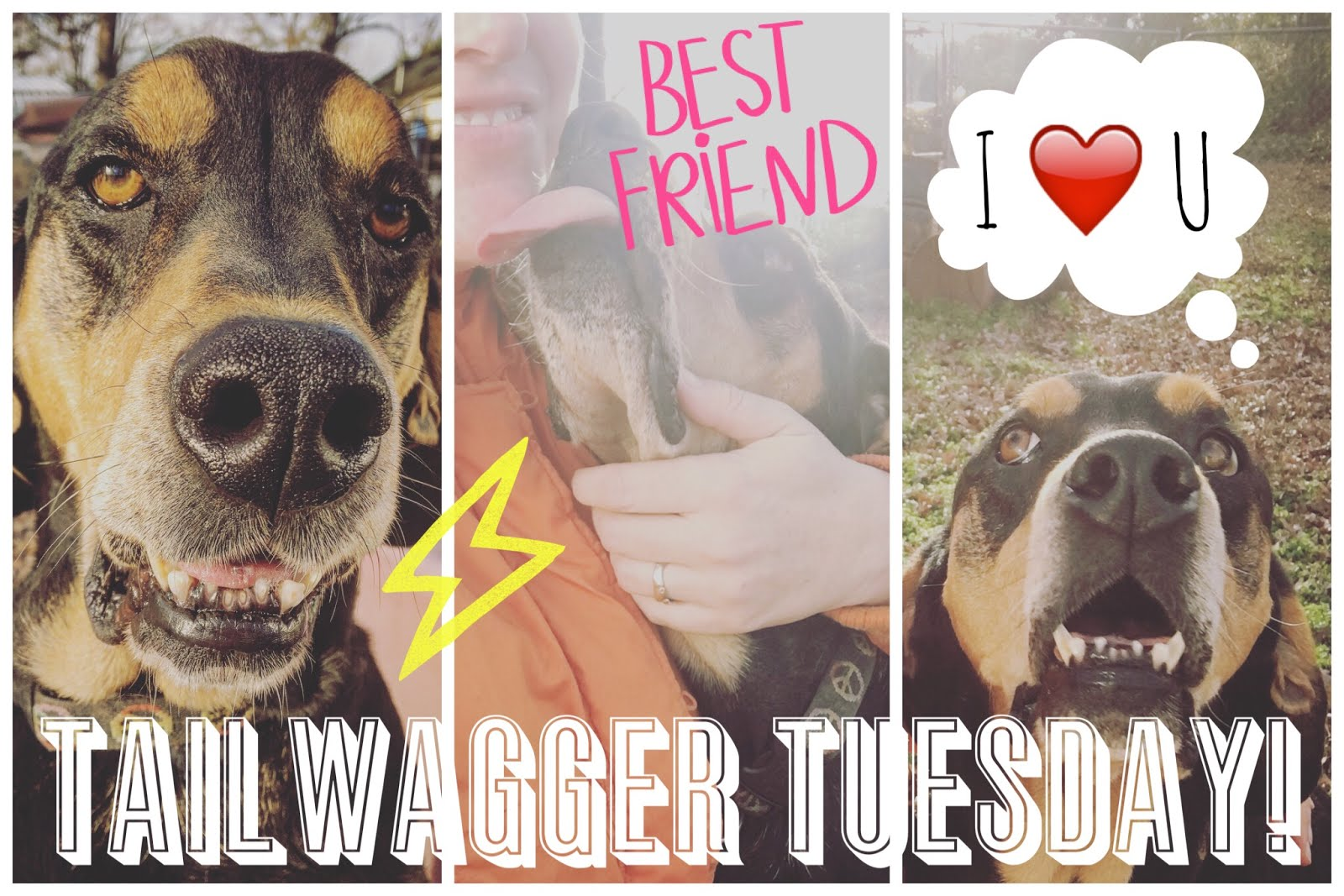 TAILWAGGER TUESDAY