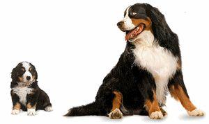 Tout chien a droit au respect et à être aimer