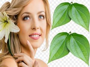 Manfaat Daun Sirih untuk Kecantikan Wanita dan Kesehatan
