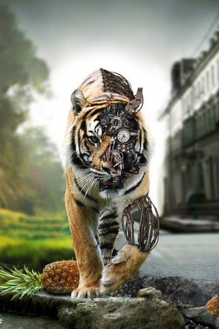 Wild Tiger IPhone Wallpapers