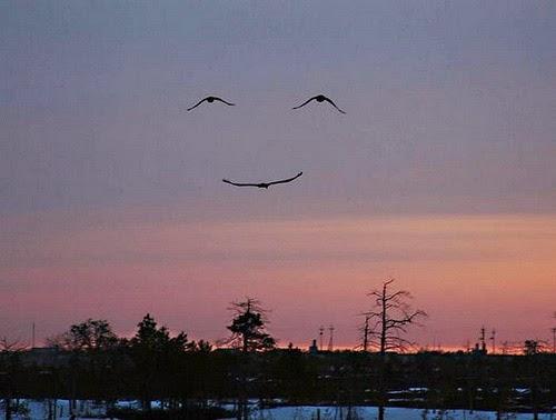 Una pardals volant que semblen una cara somrient.