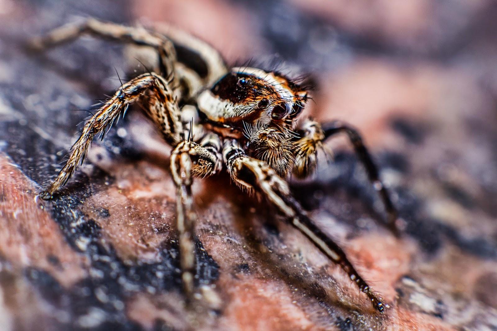 Fotografía macro de una araña en el blog fotosmacro