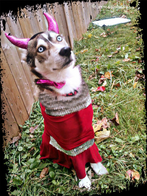 Huskies In Costume!