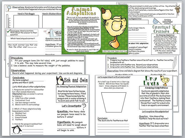 Third Grade Thinkers Animal Adaptations Engaging Investigations – Animal Adaptations Worksheets