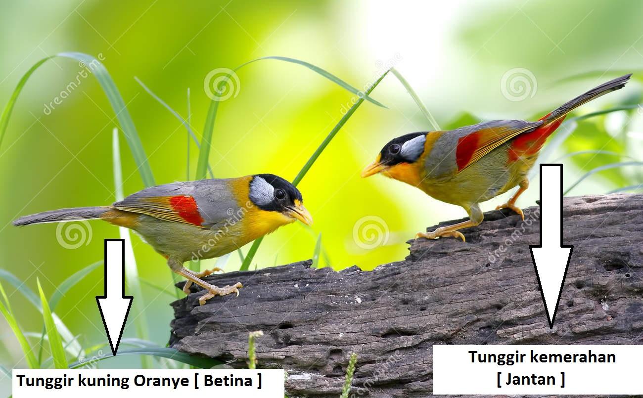 Bct dengan burung kecil tuh susah 8