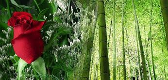 bunga mawar dan bambu
