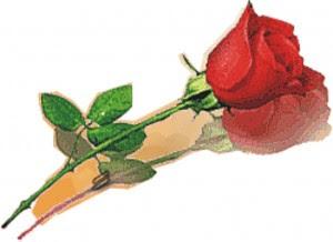http://4.bp.blogspot.com/-Xouqpk36LaQ/T3Qe8f0N3dI/AAAAAAAAARc/YUctfrLHPUM/s1600/bunga_mawar.jpg