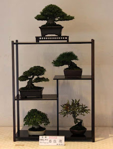 A Bonsai Set