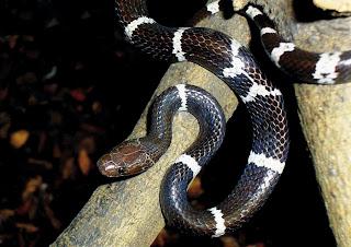 208 Species Binatang Baru Ditemui Di Sepanjang Sungai Mekong