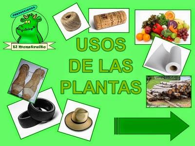 Aprendemos con todos y de todos las plantas y los alimentos for Cuales son las plantas ornamentales y para que sirven