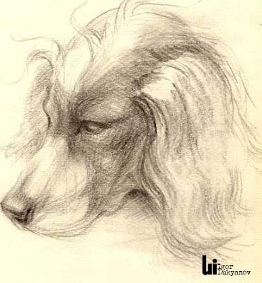 dessin de chien, qroquis d'animal familler