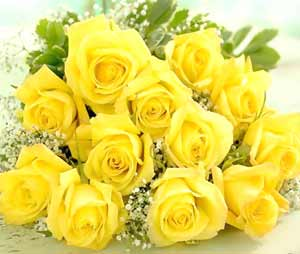 Funny wallpapers flowers rose yellow meaning behind yellow roses colored roses yellow roses means what a yellow rose means red and yellow roses meaning whats the meaning of yellow roses yellow rose wallpaper hd mightylinksfo