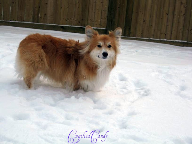 Our boy loves the snow and enjoys romping in the