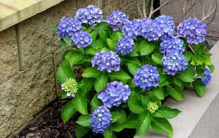 El jardin del angel jardineras llenas de color - Jardineras de colores ...