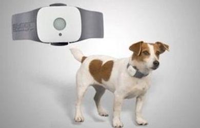 Notidades d 39 novedades gadget para no perder a tu mascota - Novedades para mascotas ...