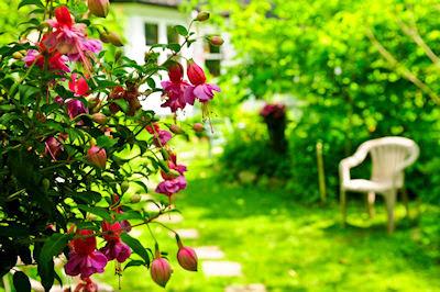 Miradas de mi jardin - Una flor llamada