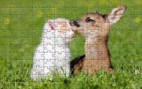 Friendship among animals