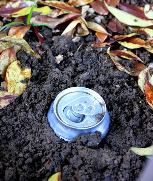All Stuff How To Get Rid Of Slugs And Earwigs With Beer