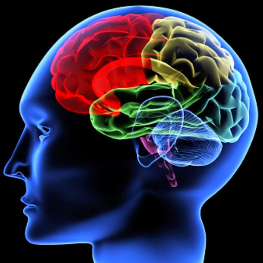 Regiões do cérebro humano