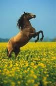 Caii sunt iubirea mea...
