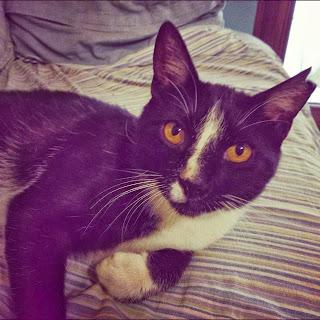gatto senza zampa