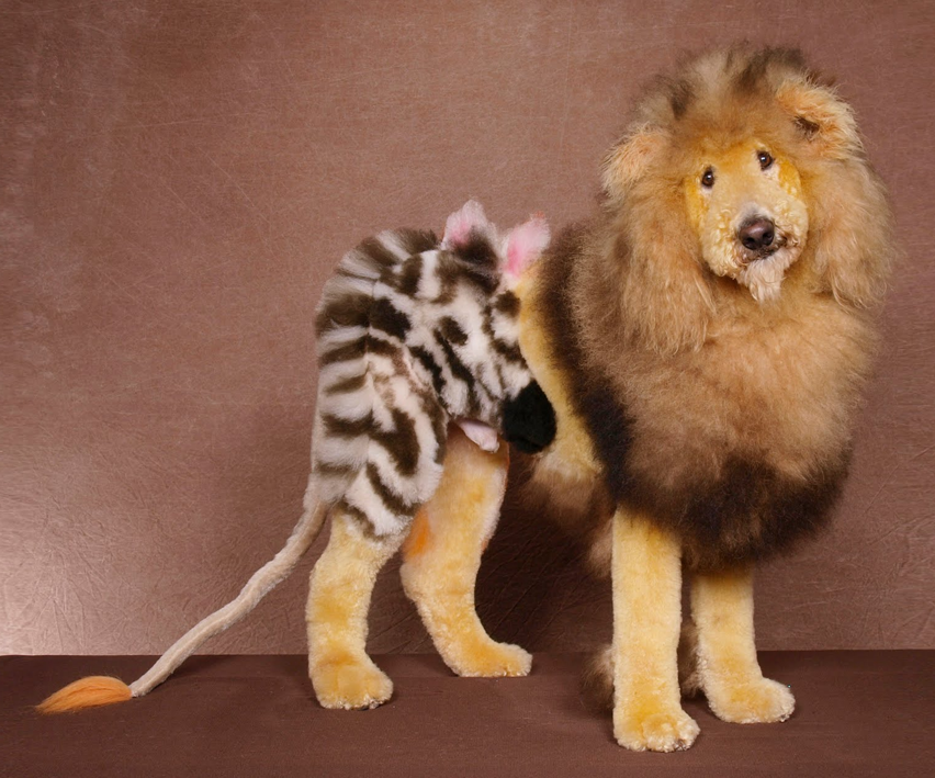 How to dye your dog like a lion, tiger or bear (oh my!)