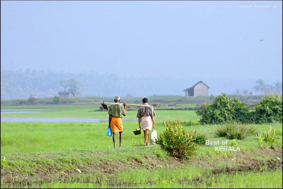 new generation: kerala soul...elephants and nature