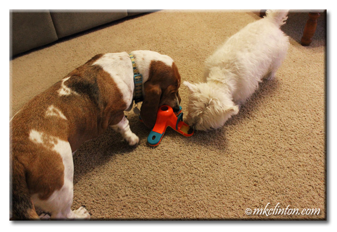 Basset and Westie playing with Kibble Drop toy