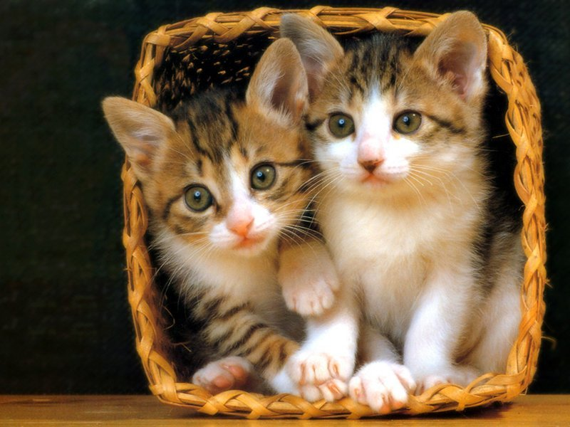cats+(1) The Basics Of Cat Care Essentials