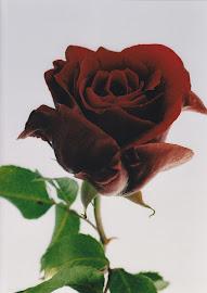 El aroma de tu rosa