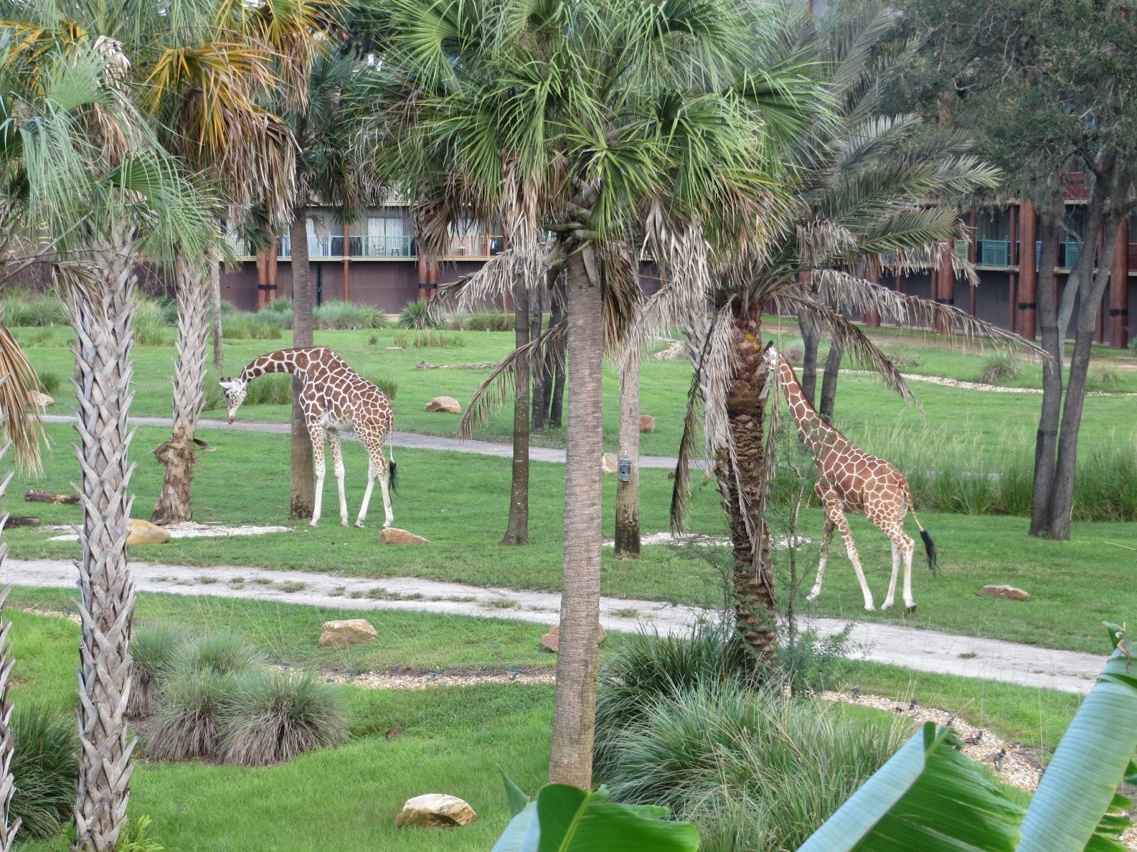 Our most recent trip to Walt Disney World we stayed in a 2 bedroom villa at  Disney s Animal Kingdom Villas  This resort is in the deluxe villa  category. Two Magical Moms  Disney s Animal Kingdom Lodge  Kidani Village Review
